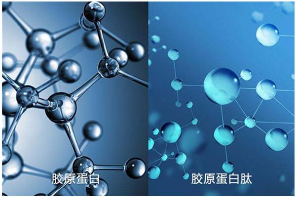 金昌推荐小分子肽粉公司